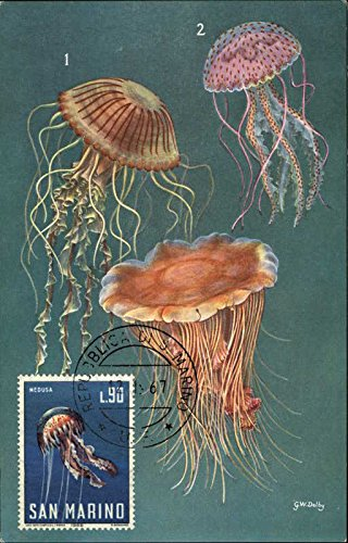 Venomous Jellyfish Other Animals Original Vintage Postcard from CardCow Vintage Postcards