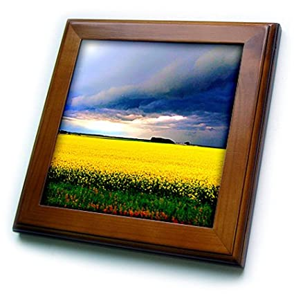 3D Rose Prairie Storm Yellow Grass Framed Tile 8 x 8