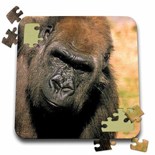 - Danita Delimont - Gorillas - Captive western lowland gorilla - NA02 MWT0079 - Michele Westmorland - 10x10 Inch Puzzle (pzl_84151_2)