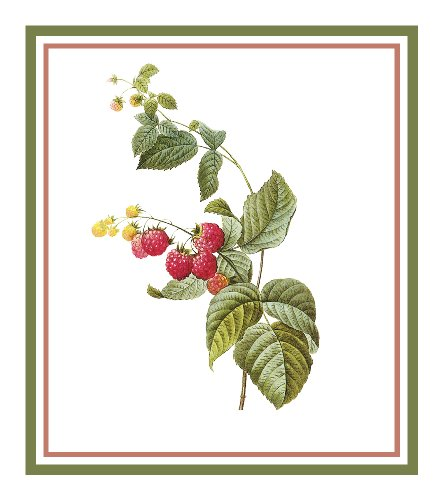 Orenco Originals Raspberries Botanical by Redoute Counted Cross Stitch Pattern ()