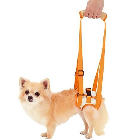ChengYi Soporte de elevación para Perros y arnés de rehabilitación ...