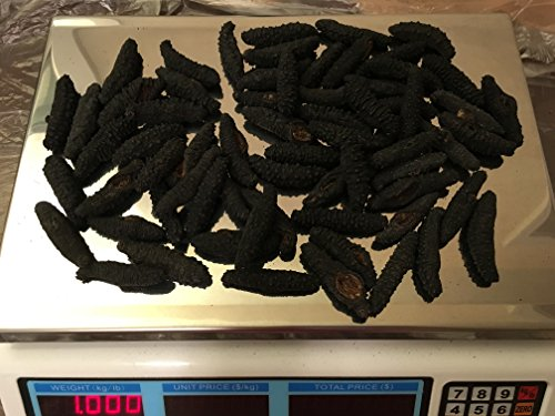 Dried Wild Sea Cucumber,岩刺参,Holothuria Mammata, Grade AAAA (LARGE size) 1LB by Dorothy27