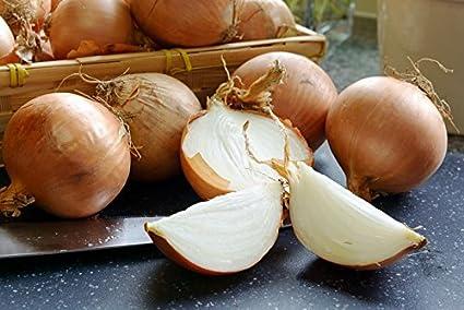 """Cebolla """"Kristine"""" - semilla"""