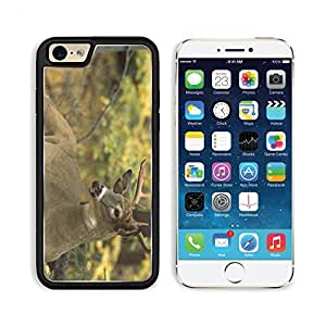 White Tailed Deer North America Apple iPhone 6 TPU Snap Cover Premium Aluminium Design Back Plate Case Customized Made to Order Support Ready Liil iPhone_6 Professional Case Touch Accessories Graphic Covers Designed Model Sleeve HD Template Wallpaper Photo Jacket Wifi Luxury Protector Wireless Cellphone Cell Phone