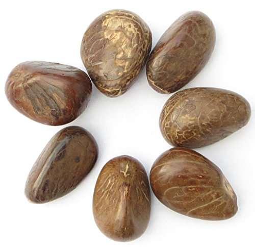 Medium Polished Tagua Nuts, 37-42 mm, Set of Seven ()