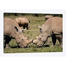 """White Rhinos Grazing Solio Game Reserve Kenya - Canvas Wall Art Gallery Wrapped 40""""x26"""" - 1.5"""" Depth"""