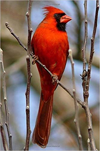illinois state bird northern cardinal journal 150 page lined