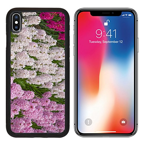 MSD Premium Apple iPhone X Aluminum Backplate Bumper Snap Case IMAGE ID 19495149 hyacinths in the spring garden - Grow Hyacinth Bulb