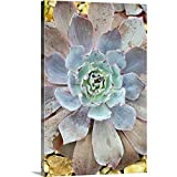 """GREATBIGCANVAS Gallery-Wrapped Canvas Echeveria 'Afterglow' by Jon Stokes 40""""x60"""""""