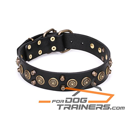 Brown fits for 20 inch dog's neck size Brown fits for 20 inch dog's neck size 20 inch Brown Fantastic Studded Leather Dog Collar with Brass Plated Pyramids and Old Bronze-Like Studs 'Regal Heritage' 1 1 2 inch wide