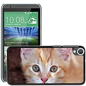Hot Style Cell Phone PC Hard Case Cover // M00114701 Eyes Cat'S Eyes Cat Hangover Kitten // HTC Desire 820