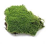 Afco Artificial Green Grass Moss Plant Ornament Miniature Bonsai Decoration