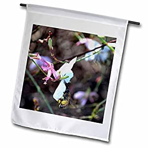 WhiteOak Photography Floral Prints - A bee gathering pollen filling its honey sacs - 18 x 27 inch Garden Flag (fl_77159_2)