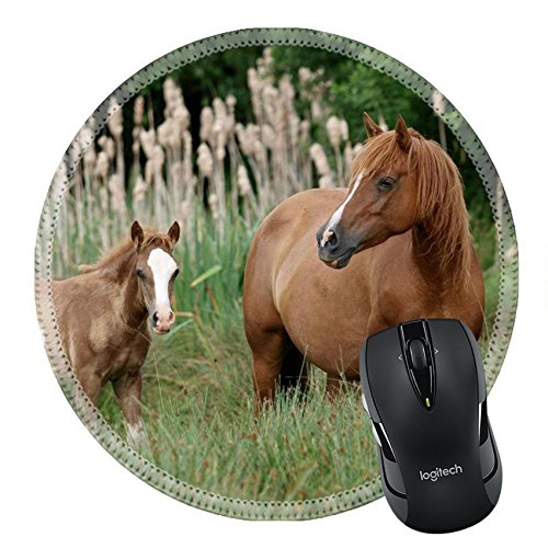 ousepad Round Mouse Pad/Mat: 13750874 A Welsh Section D mare and foal stand in long grass in a paddock (Table Pad Head Section)