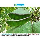 Splendour Seeds Lablab Purpureus,Hyacinth,Dolichos Bean,Chedi Avarai (20 Seeds)