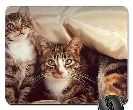 Peluche Gatos. Mouse Pad, Mousepad (Cats Mouse Pad)