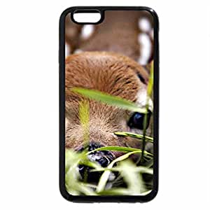 iPhone 6S / iPhone 6 Case (Black) HIDING THE YOUNG