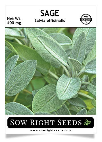 Sow Right Seeds - Sage Seeds for Planting - All Non-GMO Heirloom Sage Seeds with Full Instructions for Easy Planting and Growing Your Kitchen Herb Garden, Indoor or Outdoor; Great Gift ()