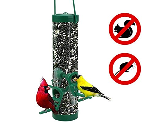 Wild Bird Squirrel (AUGYMER Wild Bird Feeder, Weather squirrel proof Bird Feeders 4 Feeding Ports 100% Clear Acrylic Easy Clean)