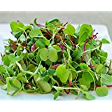 Certified Non-GMO Microgreen Seeds - Sweet Lettuce Mix (4oz (80000+seeds))
