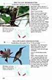 A Photographic Guide to the Birds of Southeast