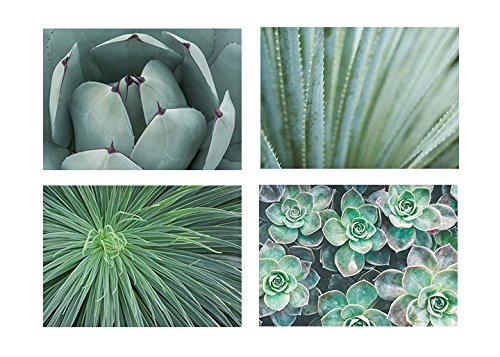 - Green Botanical Wall Art, Succulent Plant Southwestern Pictures Gift Set, 5x7 prints (set of 4) with 8x10 Mats, Fits 8x10 frame 'Wall of Succulents'