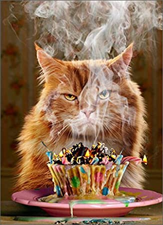 Ginger Cat Birthday Card Another Yearother Blaze Of Glory By