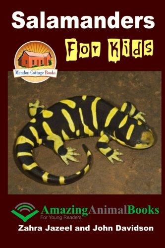Salamanders For Kids