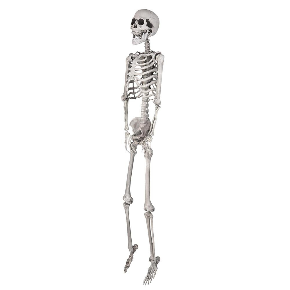 Amazon Aw 5ft Full Body Skeleton Props With Movable Joints For