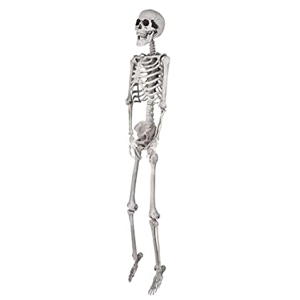 Amazon.com: AW 5ft Full Body Skeleton Props with Movable Joints for ...