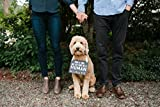 Pearhead Pet's Baby Announcement Chalkboard Photo