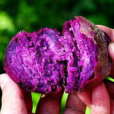 Purple Sweet Potato Seeds for Planting, Vegetables Seeds Non GMO for Home Garden Planting : Garden & Outdoor