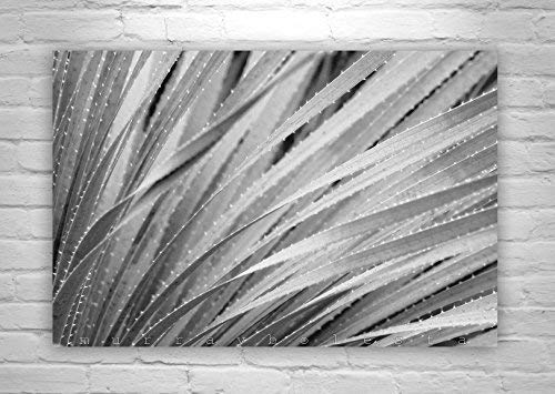 Fine Art Photography, Agave Art Print, Black and White, Desert Agave Art