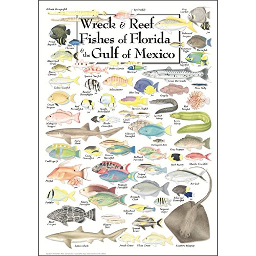 Earth Sky & Water Poster - Wreck & Reef Fishes of Florida & the Gulf of Mexico