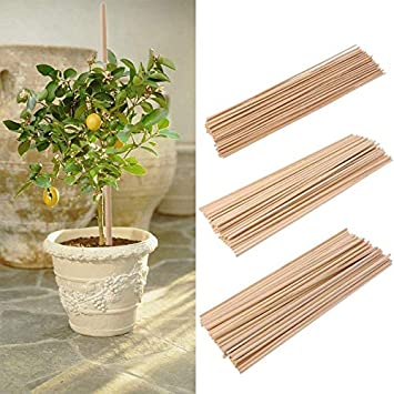 Bamboo Plant Supports Gardening Flower Support Garden Canes 4ft Foot x25 PCS