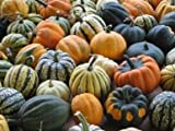 Legend Online Garden Seeds Squash Winter Autumn Mix Acorn DSVSQU141DSA (Multi) 50 Heirloom Seeds