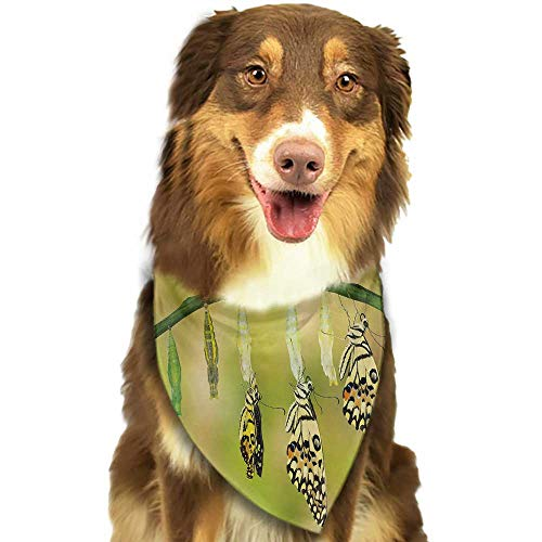 Swallowtail Life Cycle - Colored pet Scarf Swallowtail Butterfly Transformation of Lime Butterfly Natural Life Cycle Theme W27.5 xL12 Scarf for Small and Medium Dogs and Cats