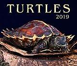 Turtles 2019