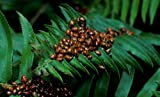 1500 Live Ladybugs - Beneficial Insects - Fresh