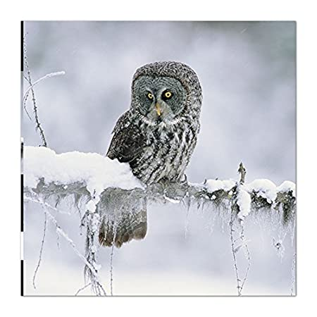 medici photographic christmas card med1509 national geographic great gray owl - National Geographic Christmas Cards