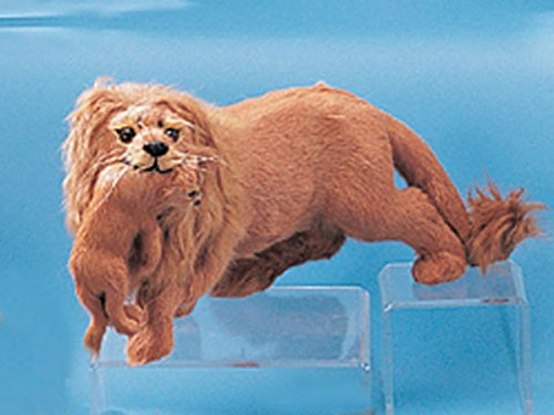 StealStreet L1201 Male Lion Wildcat Rare Collectible Figurine Lifework Animal Model