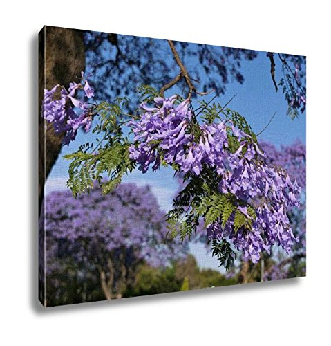 Ashley Canvas Jacaranda Blossom In Spring Wall Art Decoration Picture Painting Photo Photograph Poster Artworks, 20x25