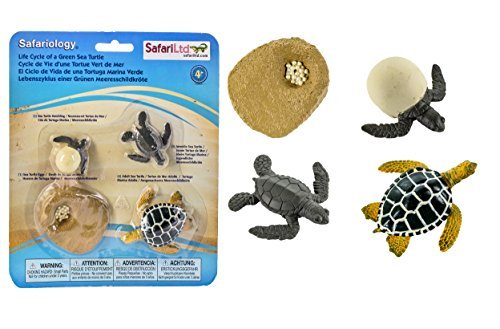 Safari Ltd Life Cycle of a Green Sea Turtle by Safari Ltd. (Life Cycle Of A Green Sea Turtle compare prices)