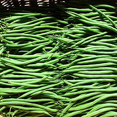 QiBest Four Seasons Beans Seeds Vegetable Seed Plants Seeds Flowers : Garden & Outdoor