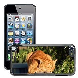 Etui Housse Coque de Protection Cover Rigide pour // M00108111 Gato Gato Rojo Hangover gato Cabeza // Apple ipod Touch 5 5G 5th