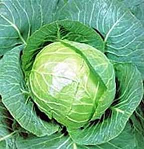 4000 seeds Golden Acre Cabbage Non GMO Heirloom New seed for 2017