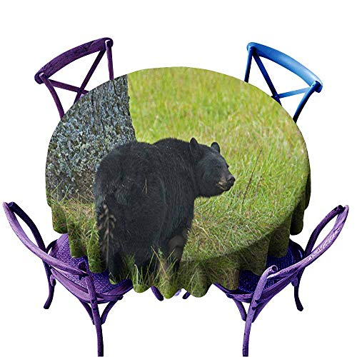 Acelik Fashions Table Cloth,Black Bear in Green Grass Beneath Walnut Tree,Table Cover for Home Restaurant,70 INCH