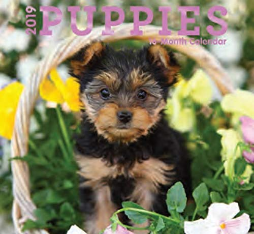 - 16 Month Wall Calendar 2019: Puppies - Each Month Displays Full-Color Photograph. September 2018 to December 2019 Planning Calendar