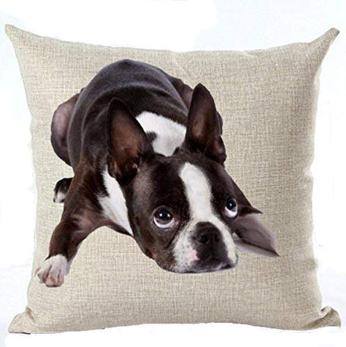 - Cotton Linen Cute Funny Various Pet Dogs Human Friends Boston Terrier Throw Pillow Covers Cushion Cover Decorative Sofa Bedroom Living Room Square 18 Inches