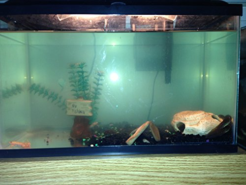 Home Comforts Laminated Poster it Shows a Tank Well mantained Suitable an African Clawed Frog i own Took This ()
